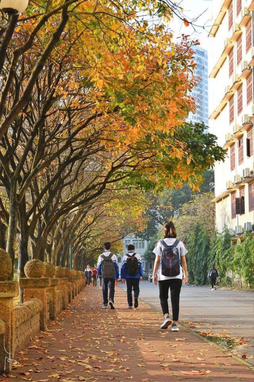 Có một 'con đường tình yêu' bên trong trường ĐH Sư phạm Hà Nội mỗi dịp đông về Ảnh 5