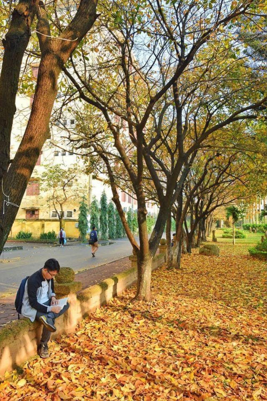 Có một 'con đường tình yêu' bên trong trường ĐH Sư phạm Hà Nội mỗi dịp đông về Ảnh 10
