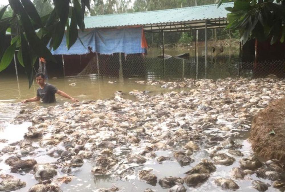 Vợ chồng Thủy Tiên tặng 115 triệu đồng cho chủ trại bị chết hơn 10.000 con gà Ảnh 2