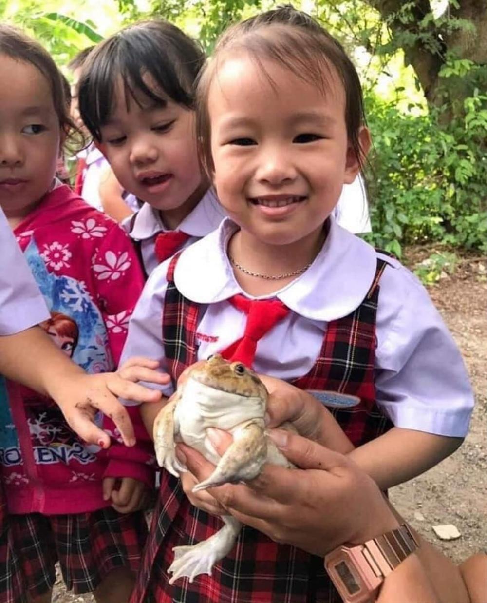 Học trò hào hứng với buổi ngoại khóa ở trại ếch, loạt ảnh cuối ghi lại kết cục bất ngờ của loài lưỡng cư Ảnh 10