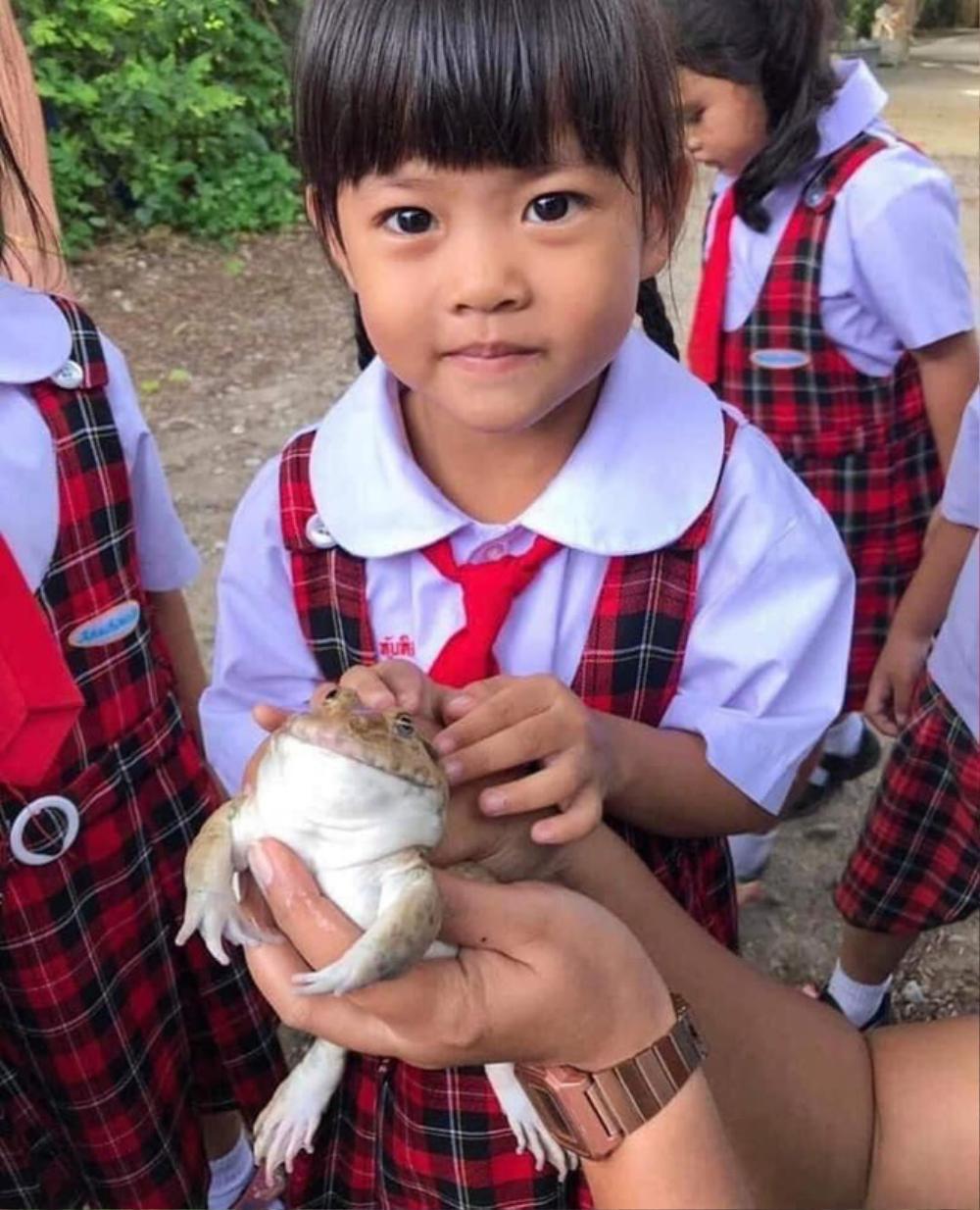 Học trò hào hứng với buổi ngoại khóa ở trại ếch, loạt ảnh cuối ghi lại kết cục bất ngờ của loài lưỡng cư Ảnh 3