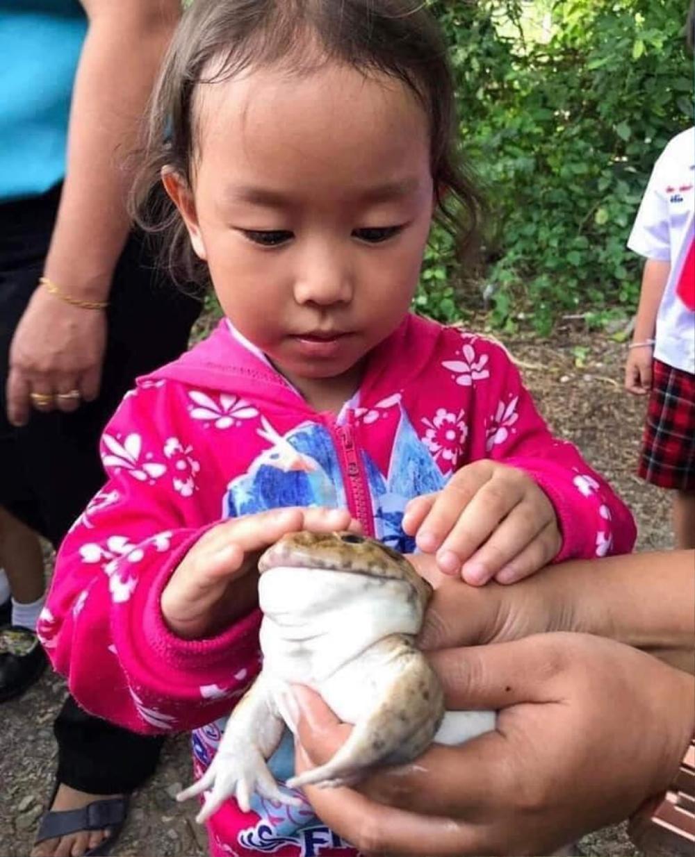 Học trò hào hứng với buổi ngoại khóa ở trại ếch, loạt ảnh cuối ghi lại kết cục bất ngờ của loài lưỡng cư Ảnh 9