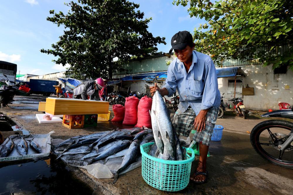 Cận cảnh sự trỗi dậy của Phú Quốc - nơi vừa trở thành phố đảo đầu tiên của Việt Nam Ảnh 13