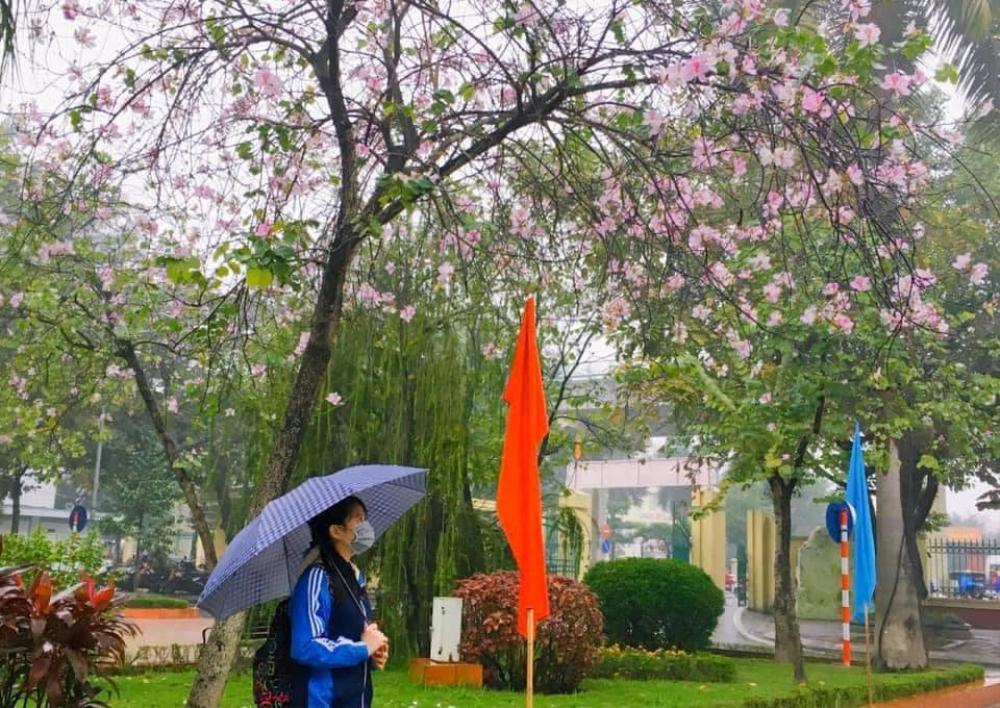 Tháng 2 này, đẹp nao lòng với ngôi trường ở Hà Nội nở rộ sắc tím hoa ban Ảnh 4