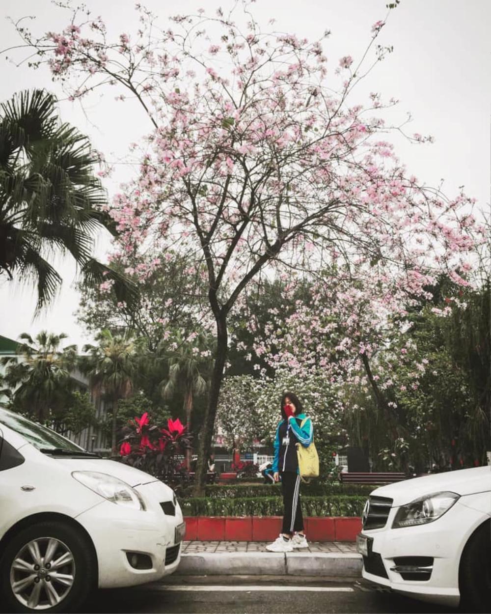 Tháng 2 này, đẹp nao lòng với ngôi trường ở Hà Nội nở rộ sắc tím hoa ban Ảnh 10