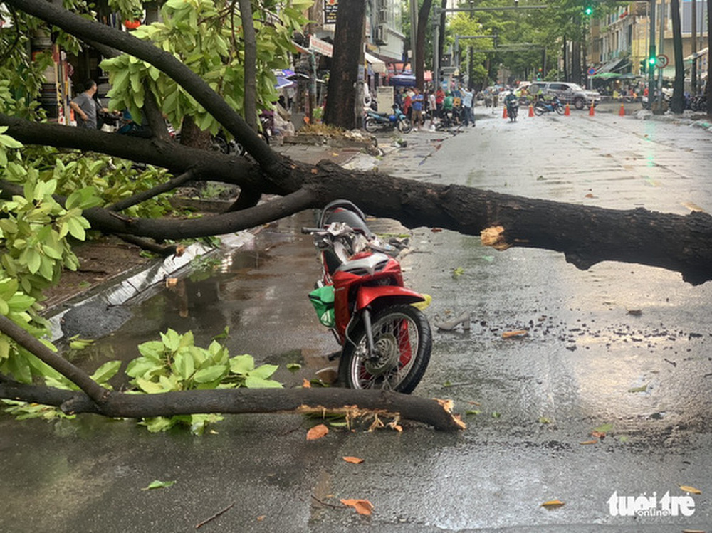 Trận mưa lớn tại TP.HCM chiều nay (12/4) làm cây xanh bật gốc, đè trúng 2 người đi đường gây thương tích Ảnh 1