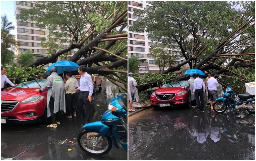 Trận mưa lớn tại TP.HCM chiều nay (12/4) làm cây xanh bật gốc, đè trúng 2 người đi đường gây thương tích Ảnh 3