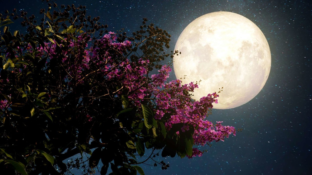 Đêm nay và mai, người dân Việt Nam có cơ hội chiêm ngưỡng 'siêu Trăng Hồng' tuyệt đẹp Ảnh 2