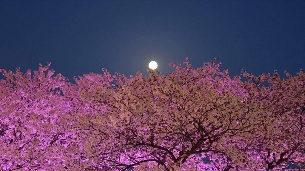 Đêm nay và mai, người dân Việt Nam có cơ hội chiêm ngưỡng 'siêu Trăng Hồng' tuyệt đẹp Ảnh 3