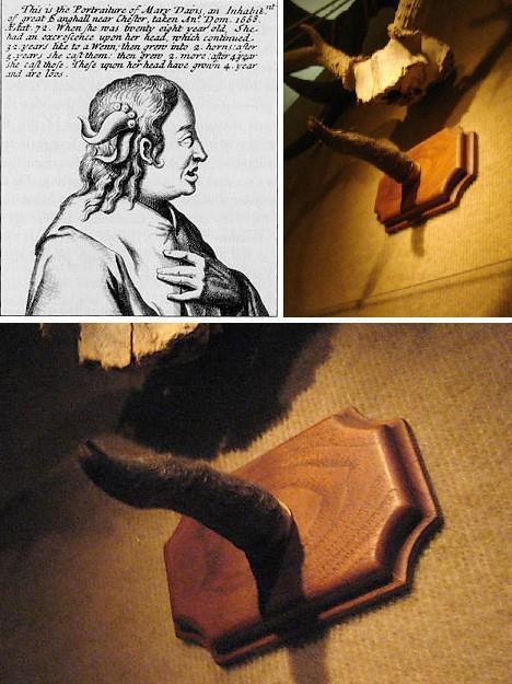 Chiếc sừng của bà Mary Davis vẫn được trưng bày trong viện bảo tàng.