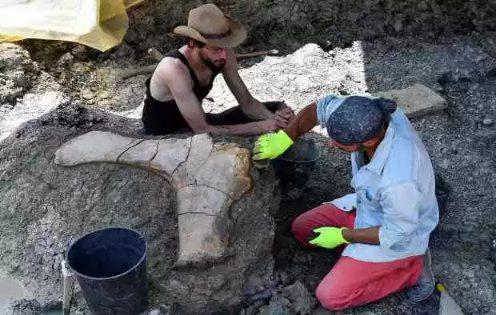 Ngoài phần xương đùi, các nhà khảo cổ sinh còn tìm thấy phần xương chậu