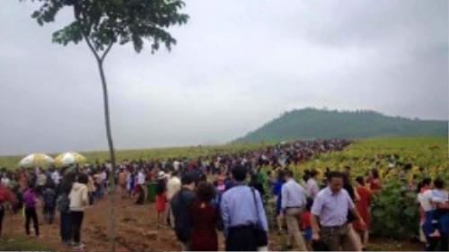 Hình ảnh người người chen chân nhau tại cánh đồng hoa hướng dương – (Nguồn: FB).