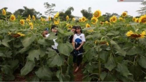Nhiều bạn trẻ đi vào sâu vào trong cánh đồng hoa chụp ảnh để lưu lại những khoảnh khắc đẹp nhất – (Ảnh: Phương Thảo).