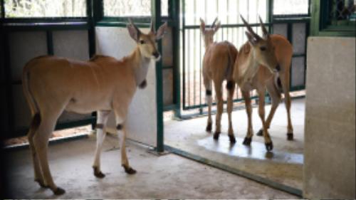 Nhiều động vật quý hiếm được nuôi tại Vinpearl Safari Phú Quốc.