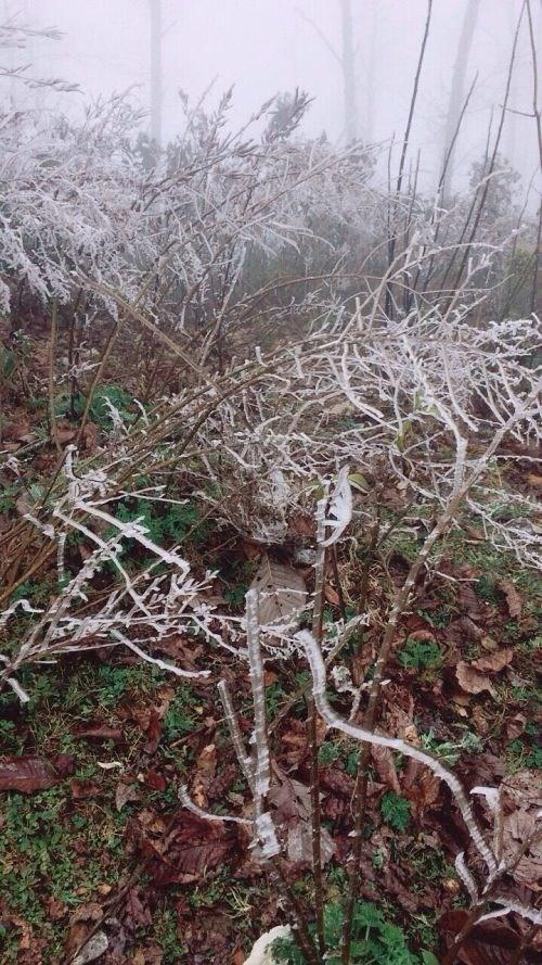 Sau khi tuyết ngừng rơi để lại một lớp tuyết trắng mỏng trên đường đi, mái nhà, ngọn cỏ và cây rừng. Đây là trận mưa tuyết đầu tiên xảy ra ở Y Tý tính từ đầu mùa đông đến nay.