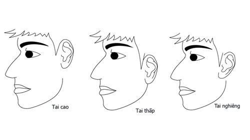 Việc đầu tiên khi xem tướng tai chính là xem vị trí của đôi tai.