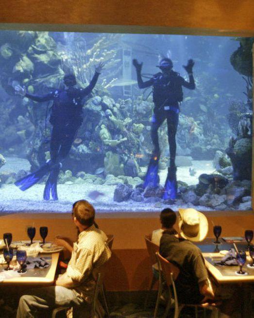 8 nhà hàng dù cạn ví nhưng các ông bố bà mẹ vẫn nhất quyết cho con cái ghé thăm khi tới Disney World ảnh 4