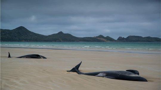 Cá voi chết trên bãi cát. Ảnh: BBC
