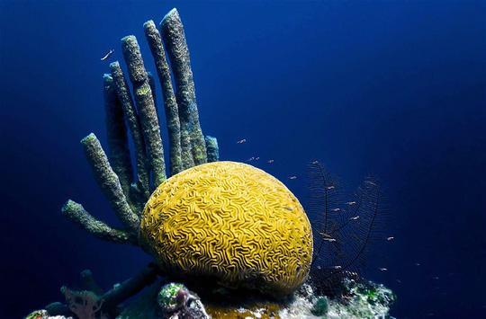 San hô bên dưới Hố xanh khổng lồ. Thông thường, thợ lặn chỉ lặn sâu xuống tối đa 40 m so với mặt nước. Ảnh: Lonely Planet