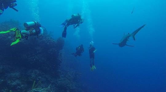 Ảnh: Aquatica Submarines