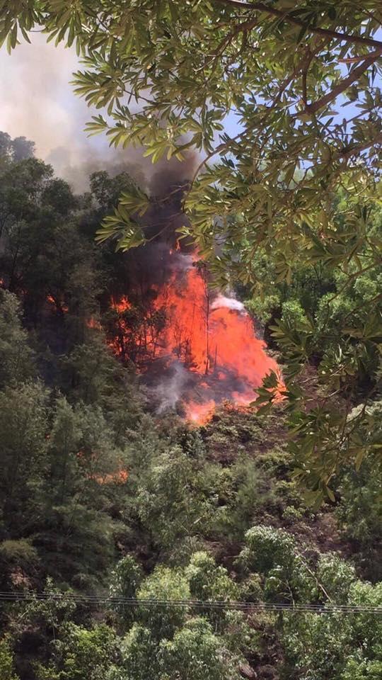 Nghi dân đốt vàng mã rằm tháng 7 gây cháy rừng ở Nghệ An ảnh 2