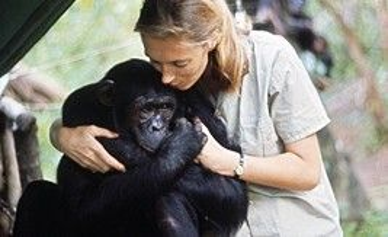 Bà quan sát được rằng con người không phải giống loài duy nhất có cảm xúc mà tinh tinh cũng trải qua những cảm giác vui, buồn giống con người vậy. Trong ảnh, một chú tinh tinh đang âu yếm nắm chặt tay Jane.