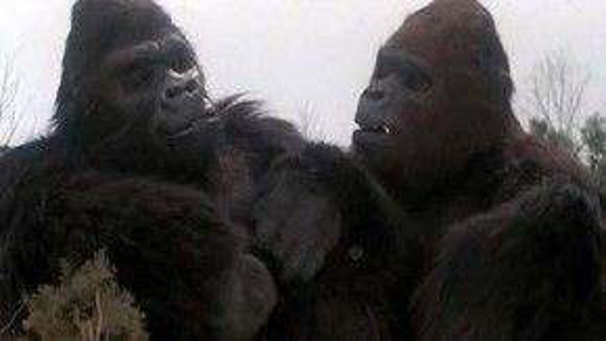 Một cặp đôi khỉ đột khổng lồ không phải ý tưởng hay trên màn ảnh.