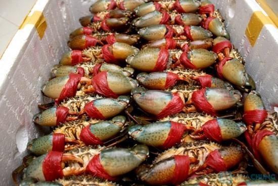 Du lịch đến biển Sầm Sơn, nếu muốn mua hải sản tươi, bạn hãy dậy sớm ra bãi C để chờ thuyền của ngư dân đánh bắt về với giá rẻ hơn trong chợ hải sản gần đó nhiều lần.