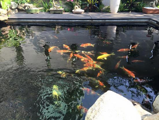 Nam ca sĩ từng chia sẻ mình đầu tư không ít tiền cho sở thích nuôi cá. Anh cũng thường xuyên khoe những hồ cá trên trang cá nhân của mình.