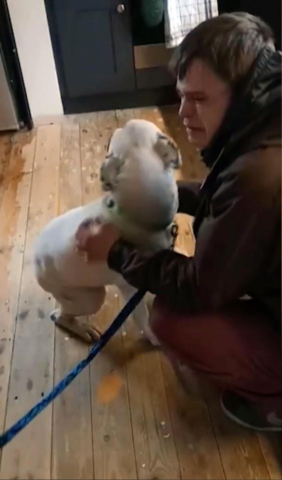 Anh Lee bật khóc nức nở khi gặp lại chú chó yêu quý của mình.