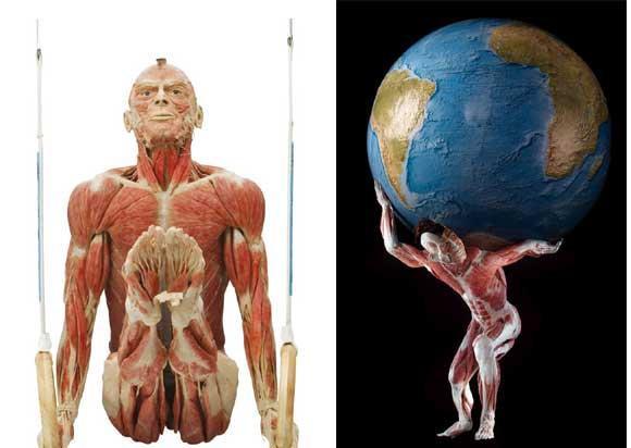 Bên trong bảo tàng cơ thể người đầu tiên trên thế giới ảnh 1