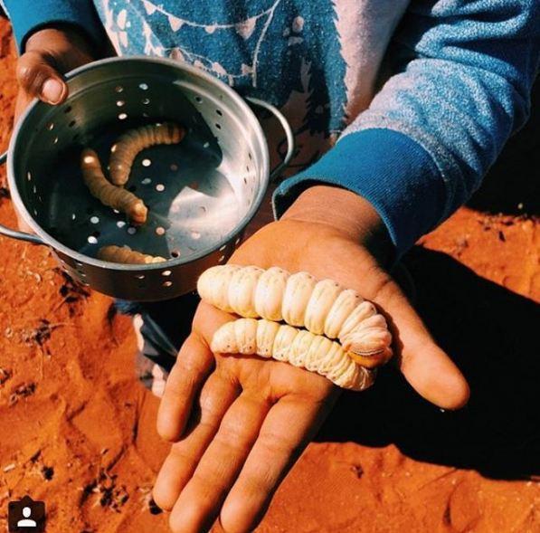 Những chú sâu béo ú là những trong những món đặc sản của Thổ dân Úc.