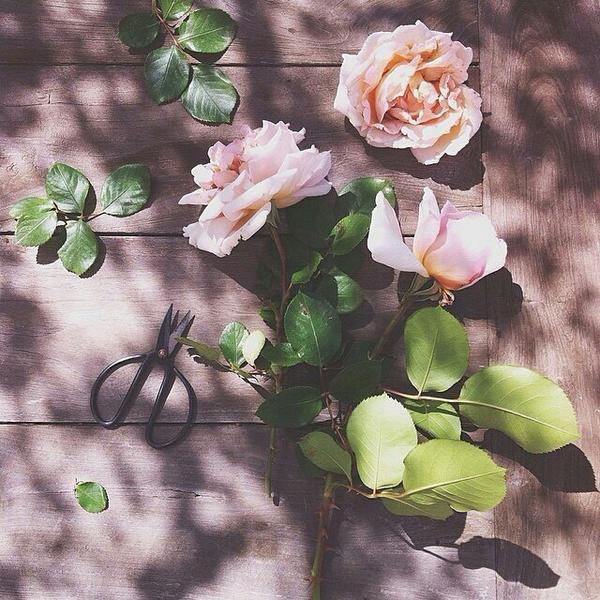 Hái hoa rồi cũng đừng vội cắm, câu like trước đã