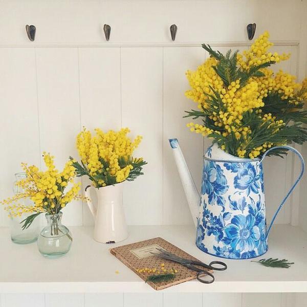 Những bó Mimosa vàng rực ở góc phòng có làm bạn phấn chấn?