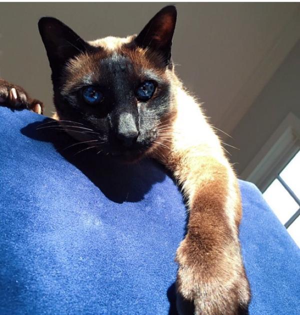 Đây là cô mèo Kitty của anh chàng Nick!