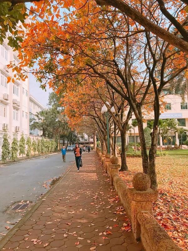 Một góc cảnh tại ĐH Sư phạm - thuộc ĐH Quốc gia Hà Nội.