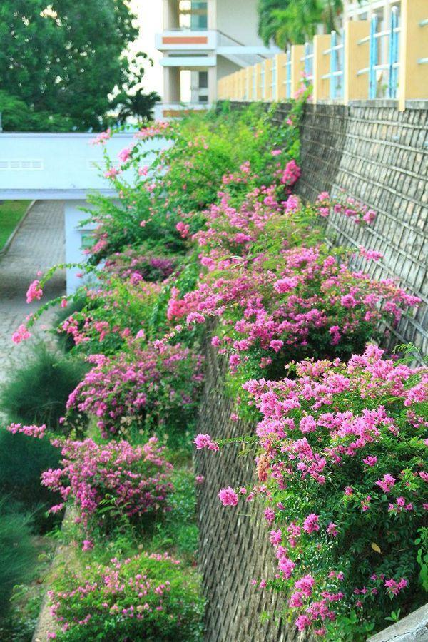 Những loài hoa khoe sắc trong khuôn viên Đại học Nha Trang.