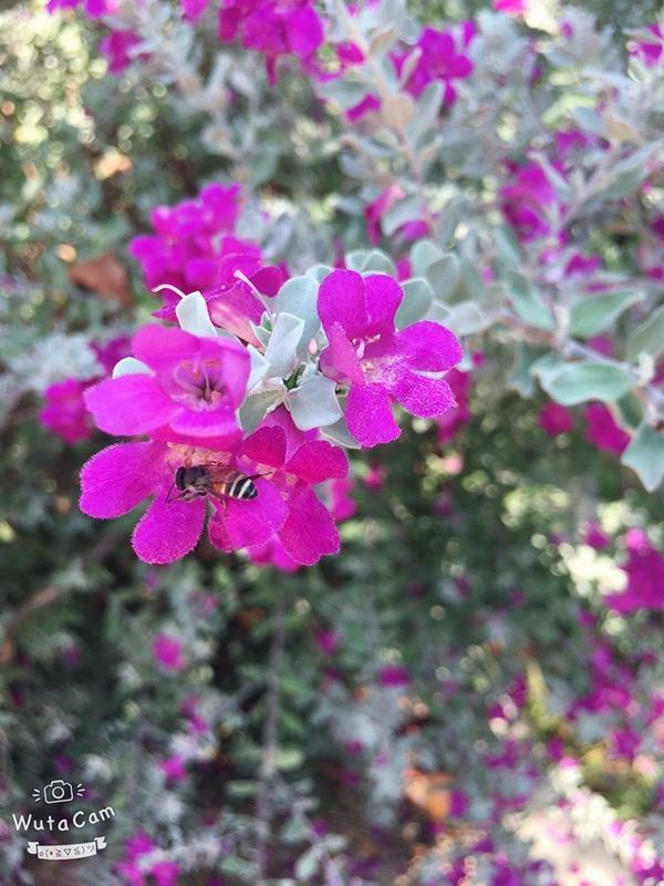 Cận cảnh loài hoa màu tím bắt mắt này.