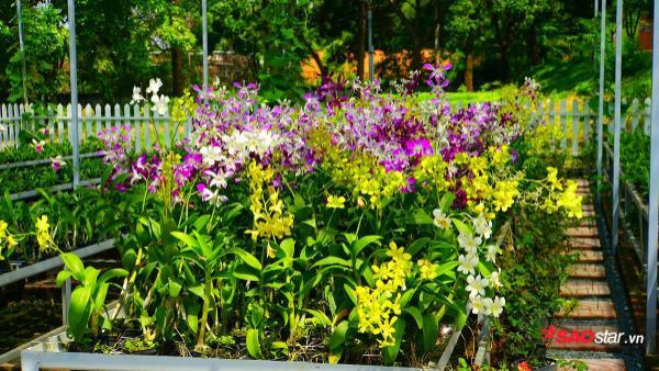 Khu vườn ươm với loài hoa lan đủ màu sắc.