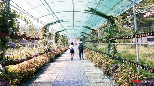 Được biết, khu vườn tuy mới đưa vào hoạt động nhưng số lượng cây xanh, hoa… đã xuất hiện rất nhiều nhờ vào sự đóng góp, ủng hộ nhiệt tình của các giảng viên, các bạn sinh viên đang theo học cũng như của các cựu sinh viên.