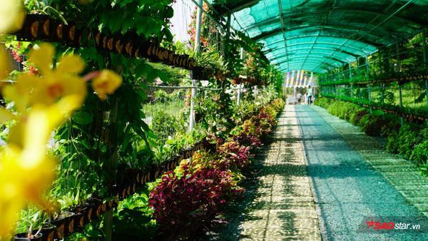 Khu vườn gồm các loài cây xanh, hoa, tiểu cảnh… cực kỳ đẹp mắt và ấn tượng.