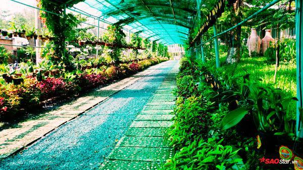 """Ngoài ra, số lượng cây cảnh xuất hiện tại """"USSH's Garden"""" ngày một nhiều hơn còn phải kể đến sự đóng góp của các đối tác của Trường."""