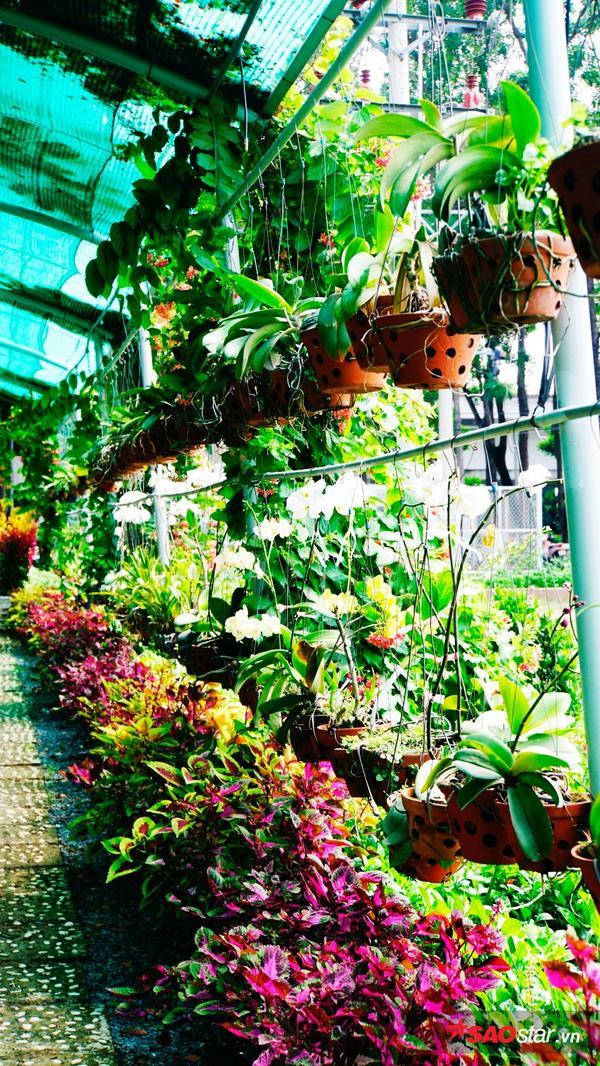 Khu vườn với nhiều loài hoa khác nhau, mỗi ngày đều có nhân viên chăm sóc, cắt tỉa gọn gàng.