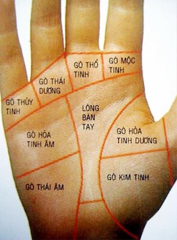 Vị trí các gò trên bàn tay.
