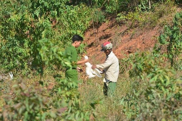 Một cán bộ công an đang thu gom vịt từ người dân, trả lại nhà xe. (Ảnh: VNN)