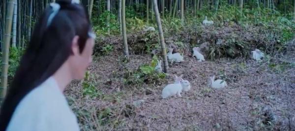 Lam Vong Cơ khẩu thị tâm phi thế thôi, rồi lại chăm sóc đám thỏ như báu vật ấy mà!