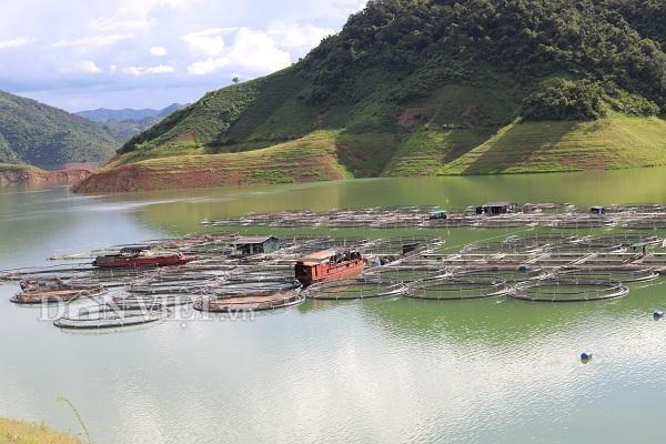 Thời gian gần đây, nghề nuôi cá tầm và các loại cá nước ngọt đã phát triển mạnh ở huyện Mường La, tỉnh Sơn La.