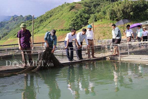 Mô hình nuôi thủy sản trên lòng hồ thủy điện Sơn La, luôn được huyện Mường La, tỉnh Sơn La quan tâm.