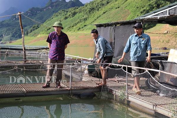 Ông Nguyễn Văn Tâm, Trưởng phòng Nông nghiệp Phát triển nông thôn huyện Mường La (đầu tiên từ trái sang) cho biết: Thời gian qua, nhiều hộ đã có của ăn của để và thu nhập hàng trăm triệu nhờ mô hình nuôi cá lồng.
