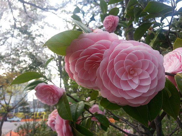 Hãy nhìn cách mà các cánh hoa xếp lại cạnh nhau.